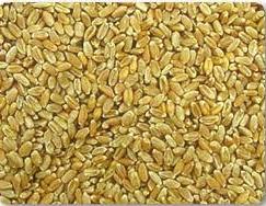 شراء Wheat