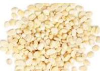 Lentils white