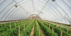 البيوت البلاستيكية الزراعية