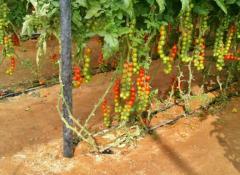 صناعة بيوت محمية عالمية وتجارة الحبوب والاعلاف